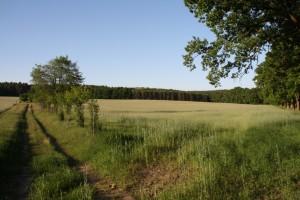 Agrarflaechen-um-Linde_T.Goettert