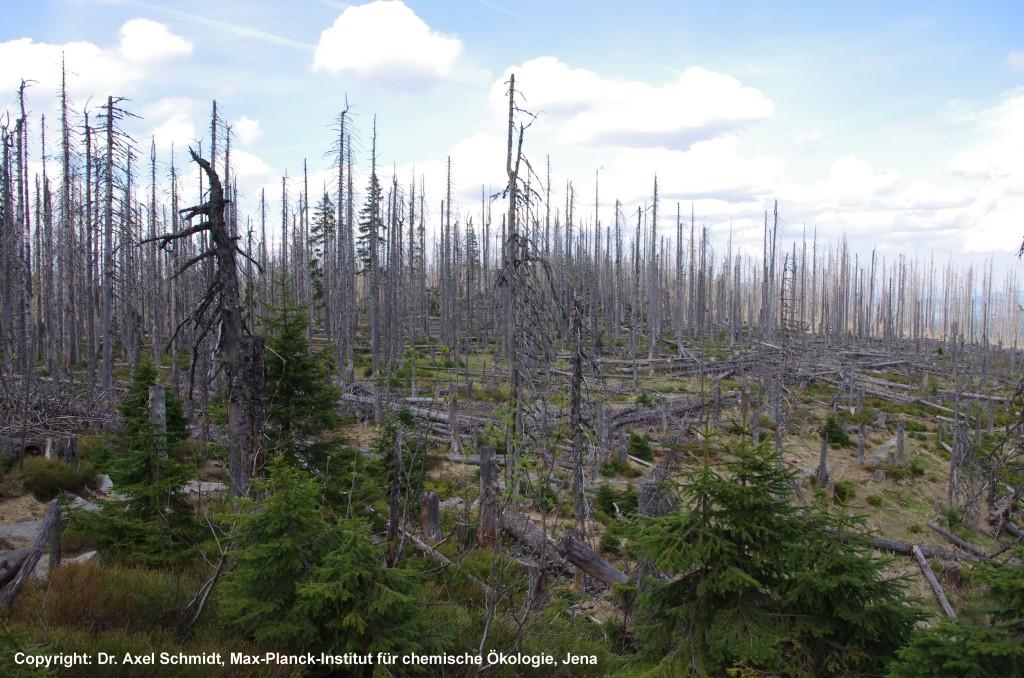 Nationalpark-Sumava-Copyright-Dr-Axel-Schmidt-MPI-Chemische-Oekologie